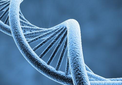 DNA - Speicherung